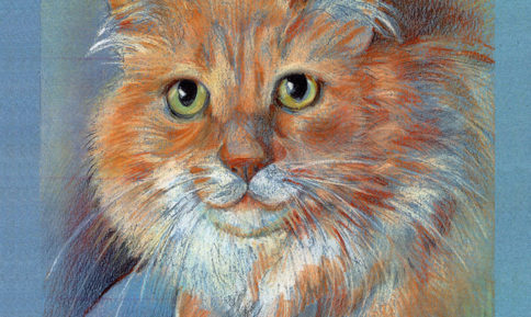 Orange Cat - Pet Illustration